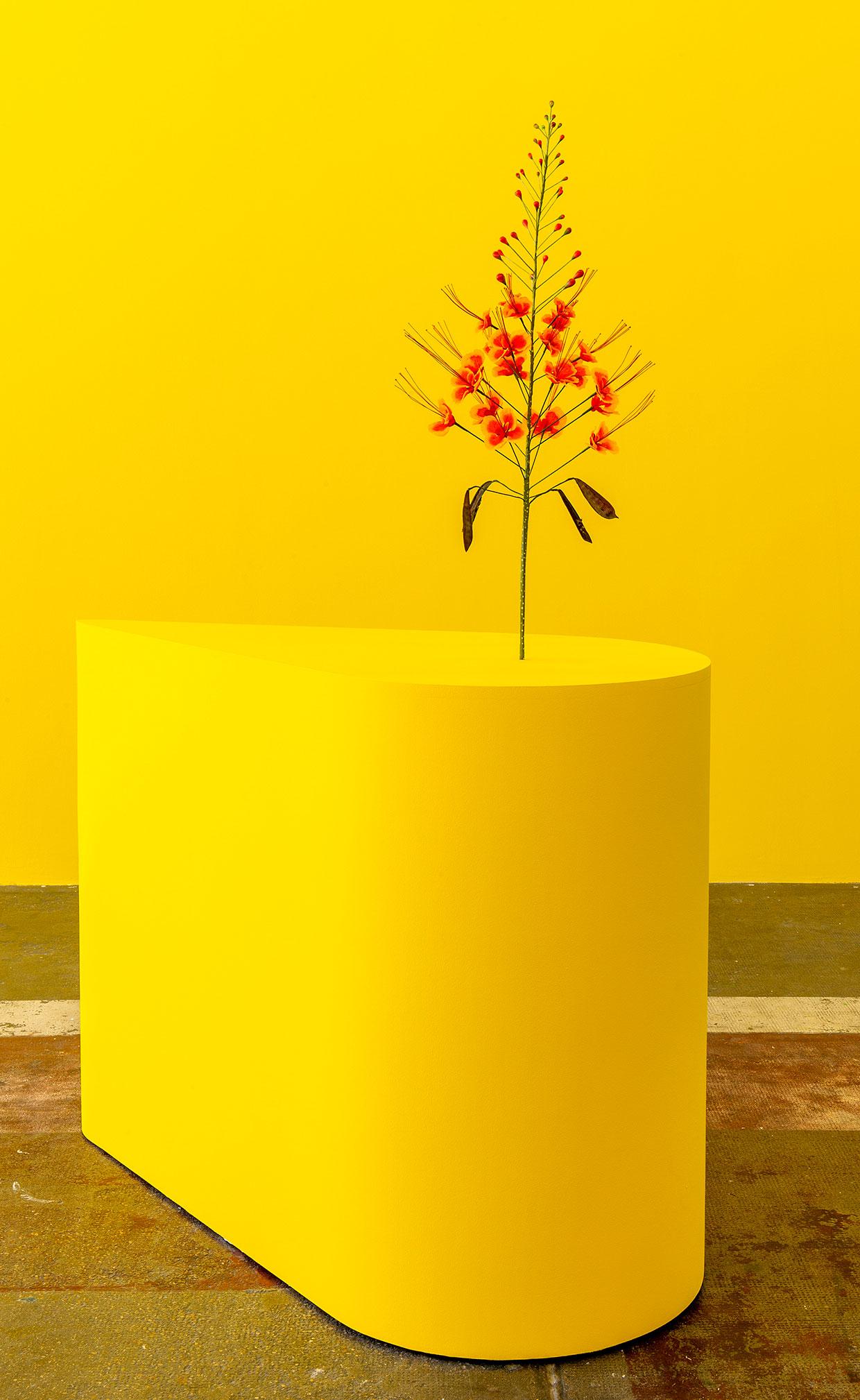 Kapwani Kiwanga, The Marias, 2020. Courtesy Centre d'art contemporaine d'Ivry - le Crédac, the artist and Galerie Tanja Wagner, Berlin. Photo: Marc Domage